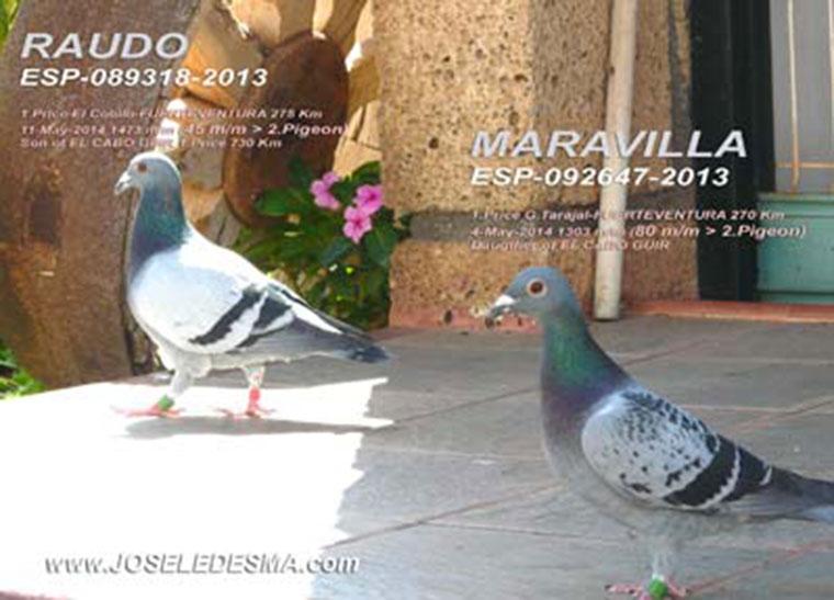 RAUDO_Y_MARAVILLA.jpg