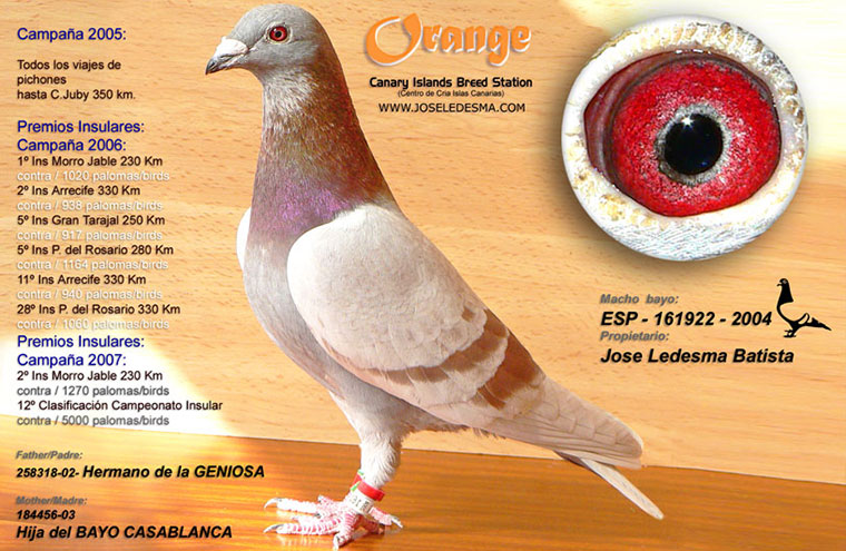 orange-6.jpg