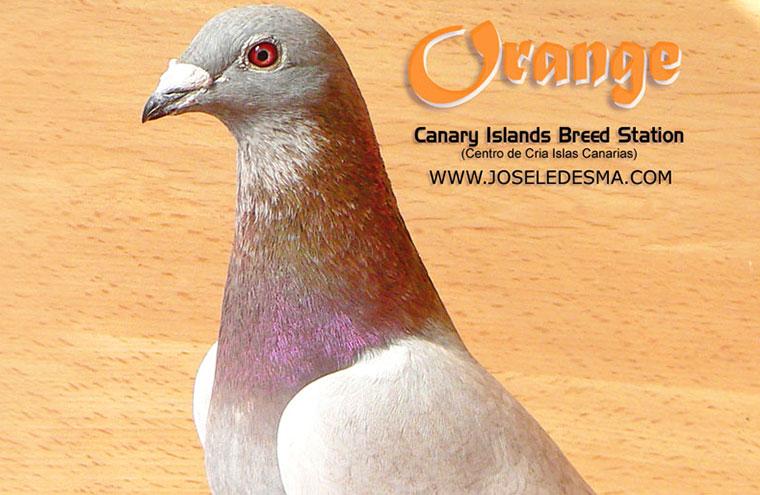 orange-6x.jpg